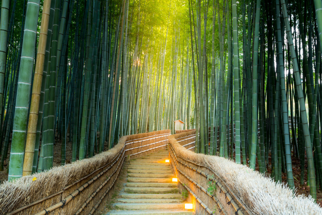 Arashiyama Bamboo Forest Private Package Tour