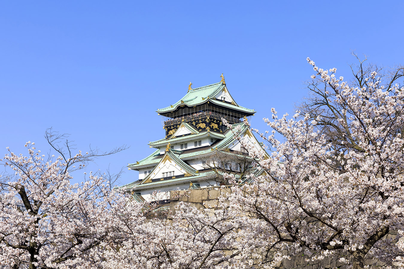 Osaka Castle Spring Sakura Essentials Private Package Tour