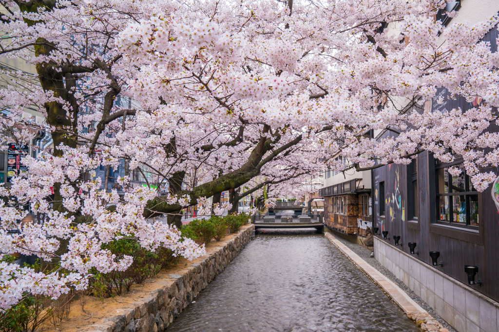 Kyoto Spring Highlights from Osaka Private Package Tour