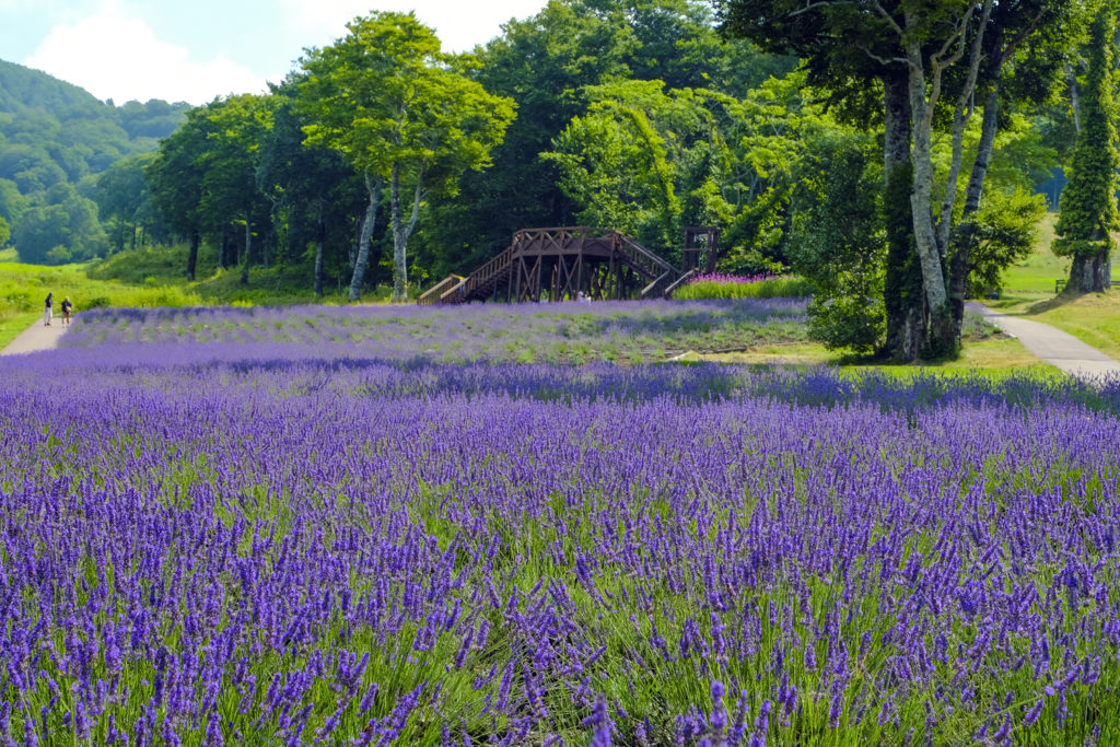 Tanbara Lavender Park Private Package Tour