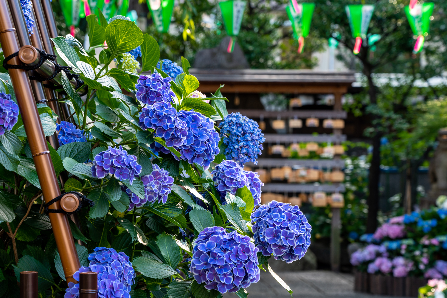 Hydrangea Festival Private Package Tour