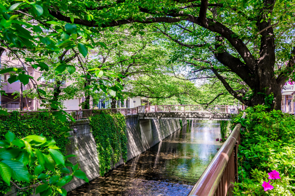 Nakameguro Private Package Tour