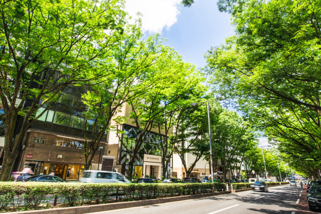 Omotesando Private Package Tour