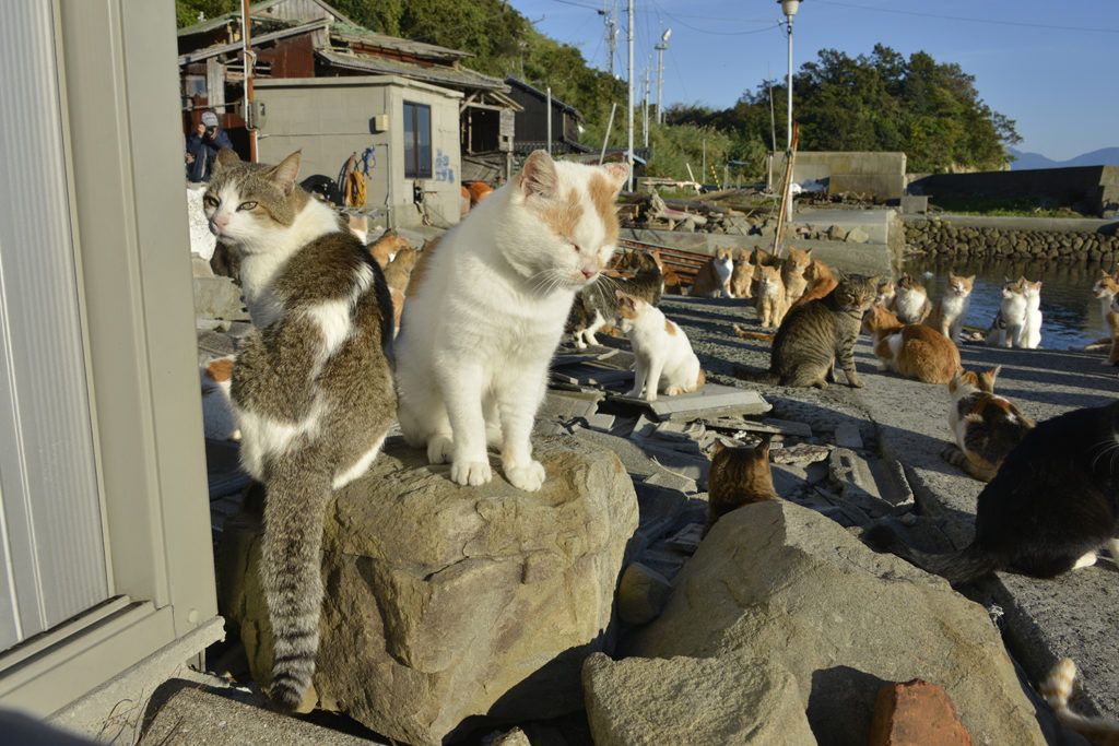 Aoshima Cat Island Private Package Tour