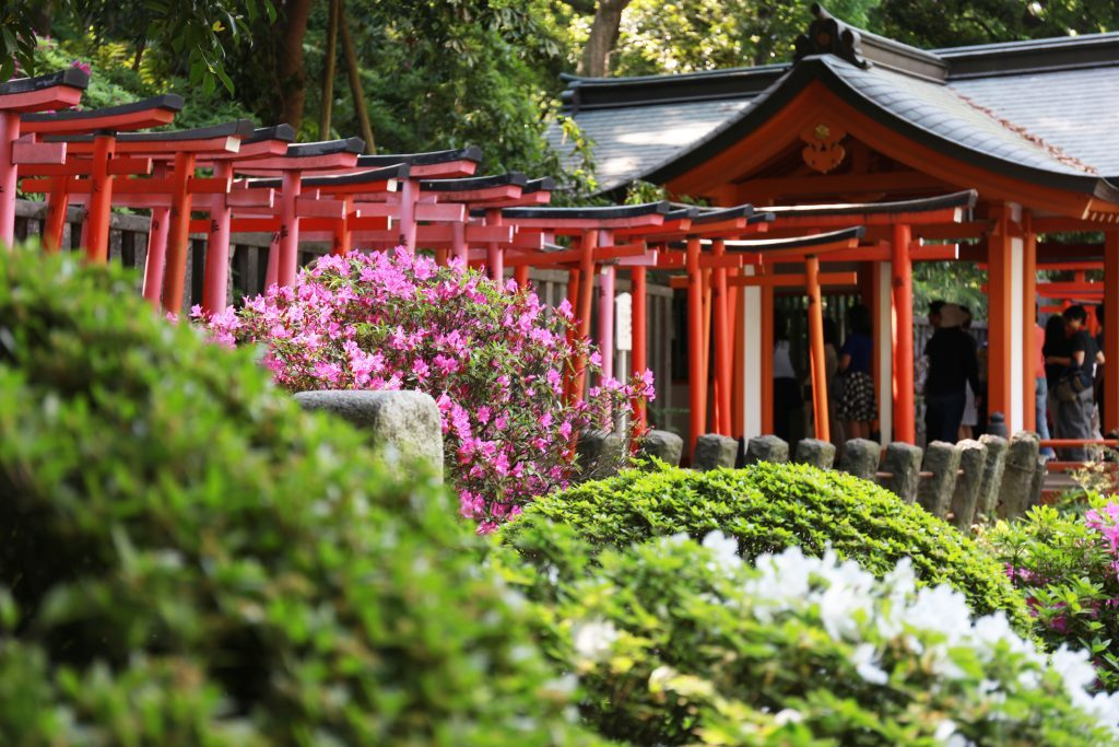 Nezu Shrine Walking Tour: Historical sites in Tokyo Private Package Tour
