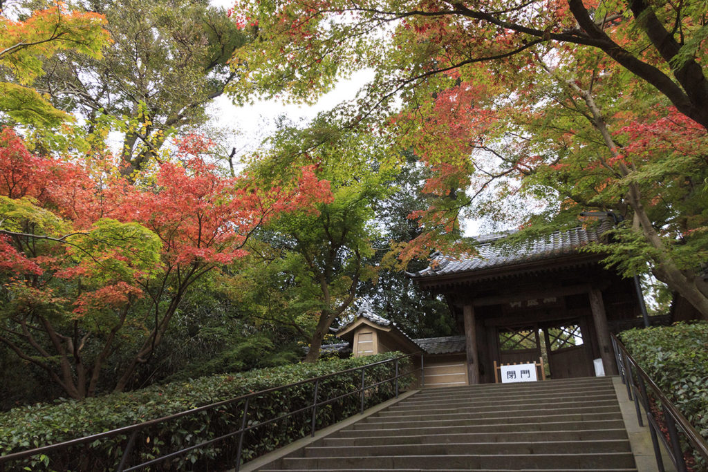 Engakuji Temple Kanagawa in Autumn Private Package Tour
