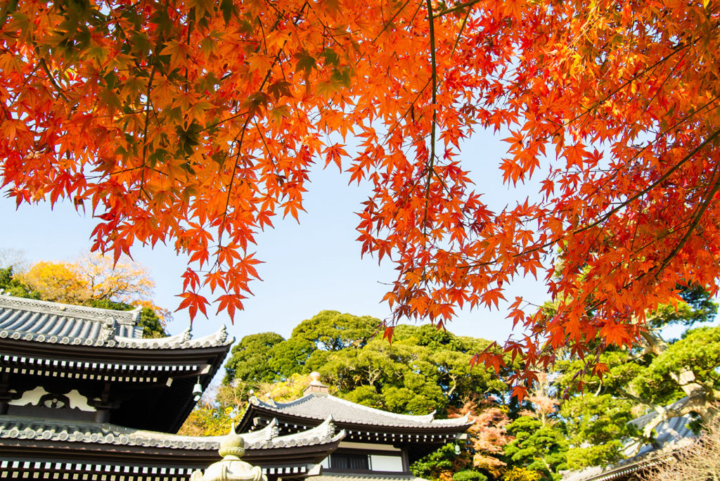 Hasedera Kanagawa in Autumn Private Package Tour