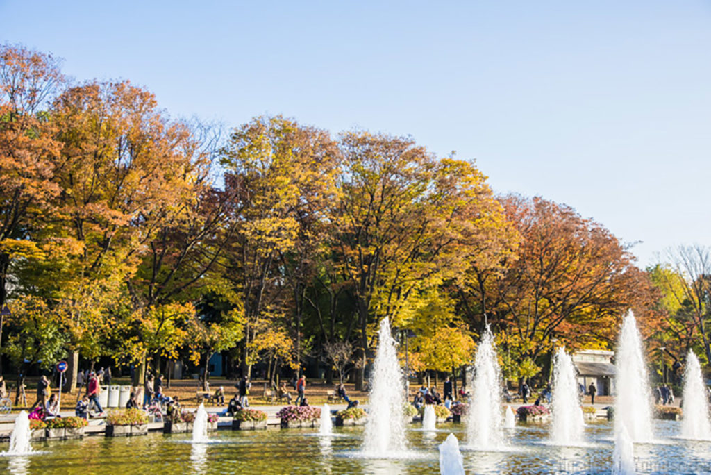 Ueno Park Autumn in Tokyo Private Package Tour