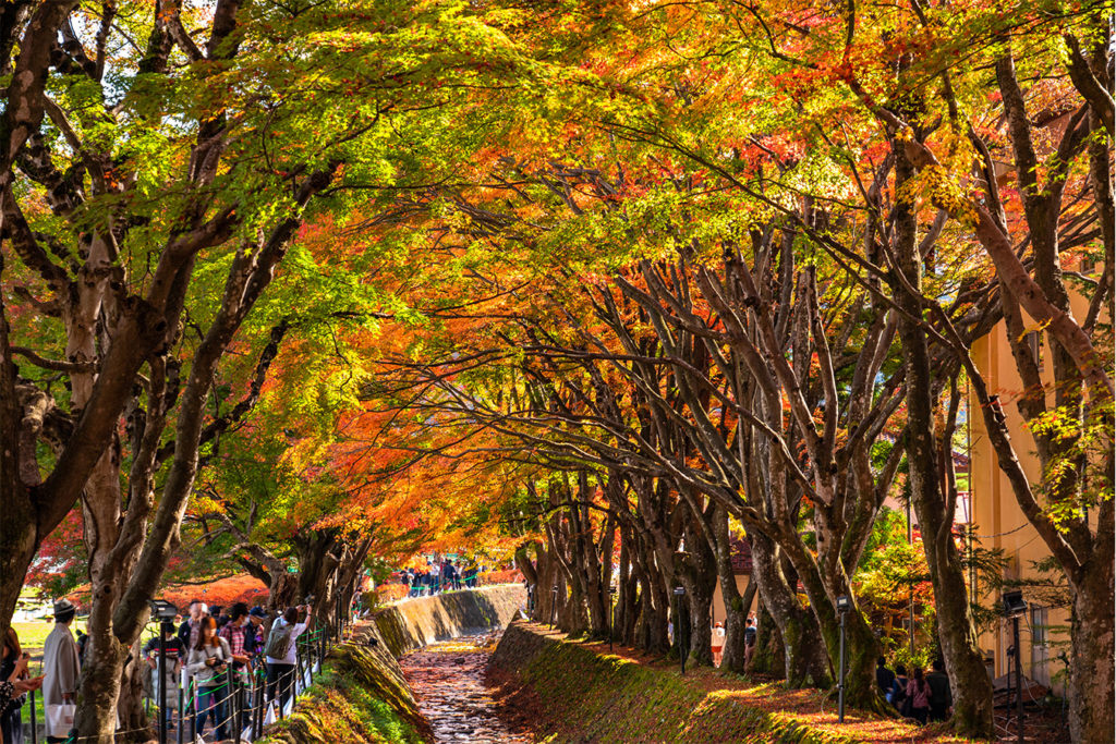 Mapple Corridor Autumn in Kawaguchiko Private Package Tour