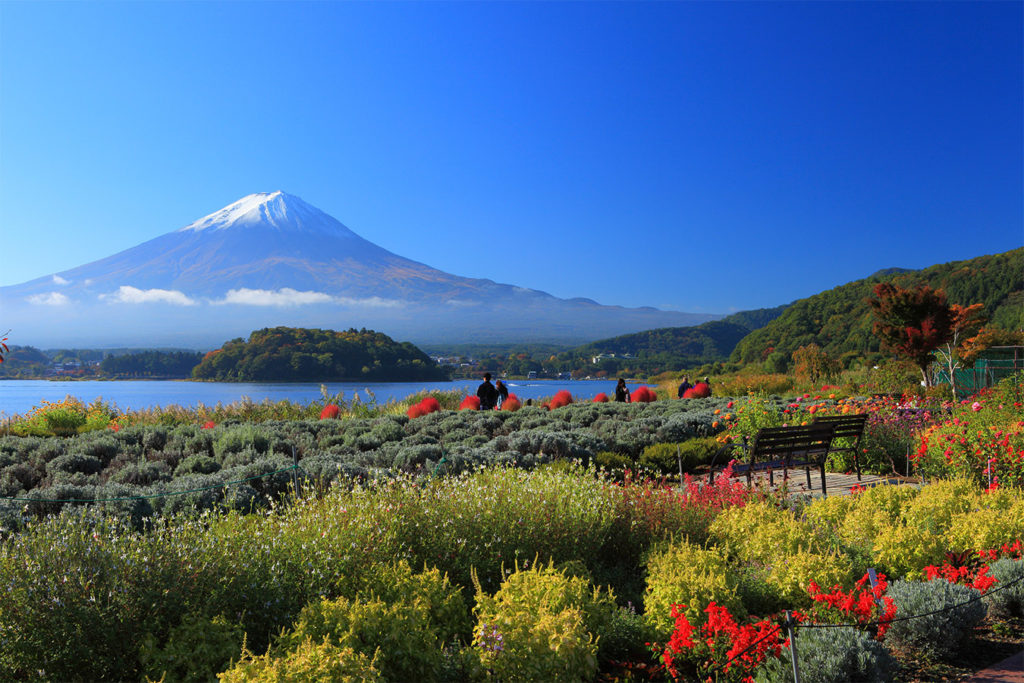 Oishi Park Discover Aokigahara and Fuji area Private Package Tour
