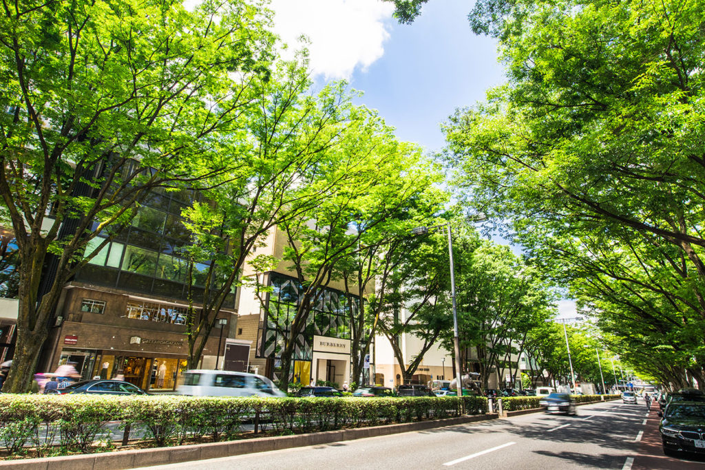 Omotesando Tokyo Bachelorette Getaway Private Package Tour
