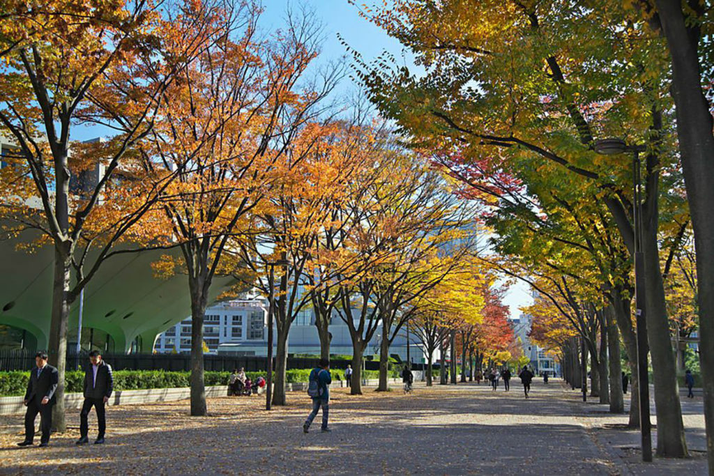 Yoyogi Park Autumn in Tokyo Private Package Tour