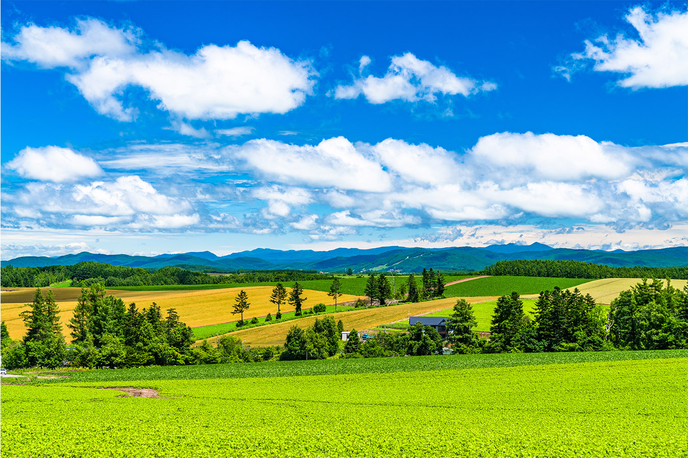Explore Furano and Biei Private Package Tour