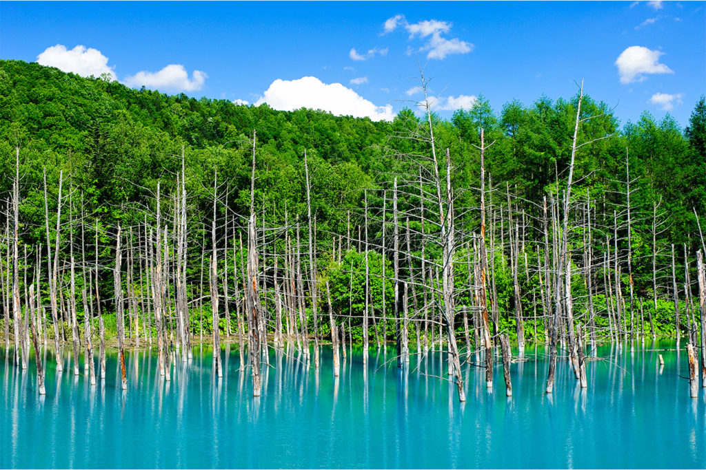 Blue Pond Explore Furano and Biei Private Package Tour