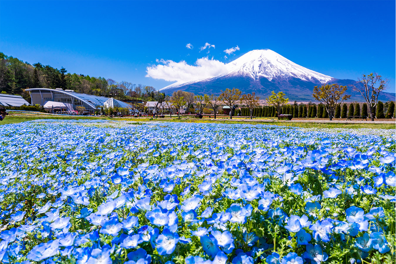 Fuji Area with Kids Private Package Tour