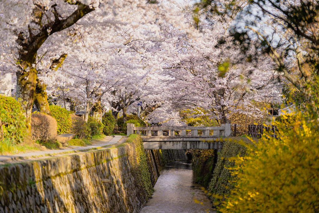 Philosopher Path Kyoto Spring Sakura Private Package Tour