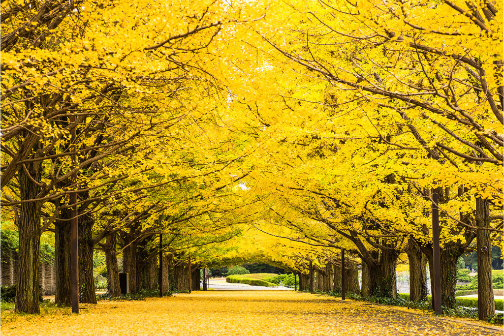 Autumn in Tokyo Private Package Tour