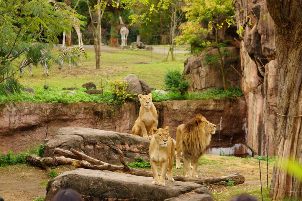 Tennoji Zoo Osaka with Children Private Package Tour