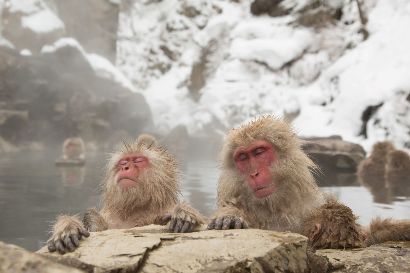 Jigokudani Monkey Park Private Package Tour